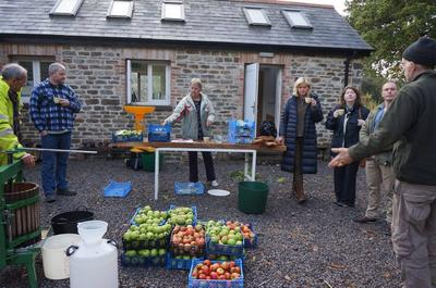 Apple Day Sampling